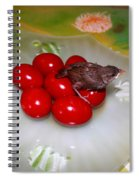 Red Eggs Bird And Flowers Spiral Notebook