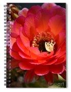 Red Elegance Spiral Notebook