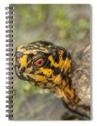 Red Eyed Alabama Box Turtle - Terrapene Carolina Spiral Notebook