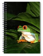 Red Eyed Green Tree Frog Spiral Notebook