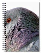 Red-eyed Pigeon Spiral Notebook