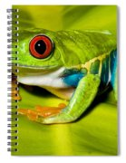 Red-eyed Treefrog Spiral Notebook