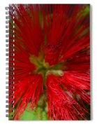Red Fairy Duster Calliandra Californica Spiral Notebook