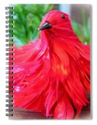 Red Feathers Spiral Notebook