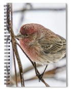 Red Finch Spiral Notebook