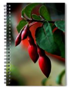 Red Flower Buds Spiral Notebook