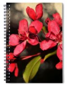 Red Flowering Crabapple Blossoms Spiral Notebook