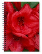 Red Flowers Spiral Notebook