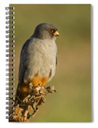 Red Footed Falcon Falco Vespertinus 4 Spiral Notebook