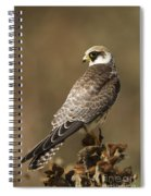 Red Footed Falcon Falco Vespertinus Spiral Notebook