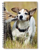 Red Fox Cub With Jack Russell Spiral Notebook