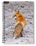 Red Fox Egg Thief Spiral Notebook