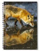 Red Fox Has A Drink Spiral Notebook