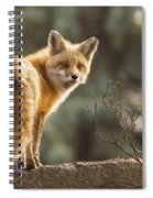 Red Fox In The Sunset Spiral Notebook