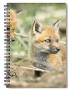 Red Fox Kits Spiral Notebook