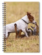 Red Fox Playing With Jack Russell Spiral Notebook