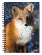 Red Fox Standing Spiral Notebook