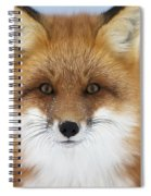 Red Fox Staring At The Camerachurchill Spiral Notebook