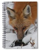 Red Fox Upclose Spiral Notebook