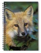 Red Fox Vulpes Vulpes, Gros Morne Spiral Notebook