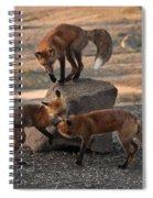 Red Foxes Vulpes Fulva Spiral Notebook