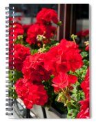 Bunches Of Vibrant Red Pelargonium Flowering  Spiral Notebook