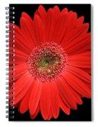 Red Gerber Daisy #2 Spiral Notebook