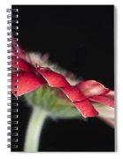 Red Gerbera 4 Spiral Notebook