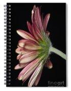Red Gerbera 5 Spiral Notebook