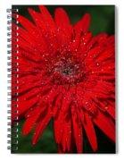 Red Gerbera Daisy Delight Spiral Notebook