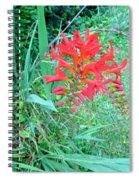 Red Gift Spiral Notebook