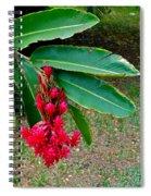 Red Ginger Chandelier Spiral Notebook