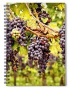 Red Grapes In Vineyard Spiral Notebook