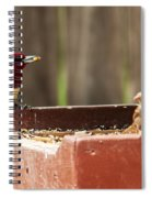 Red-headed Woodpecker Feeding Spiral Notebook
