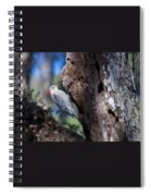 Red Headed Woodpecker Spiral Notebook