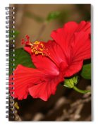 Red Hibiscus Flower Spiral Notebook