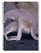Red Kangaroo. Australia Spiral Notebook