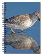 Red Knot Calidris Canutus Spiral Notebook