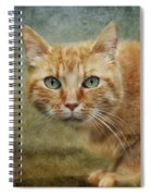 Red Lady Spiral Notebook