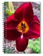 Red Lady Lily 4 Spiral Notebook