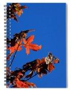 Red Leaves Blue Sky Spiral Notebook