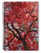 Red Leaves On Tree Spiral Notebook