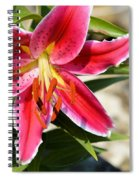 Red Lilly 8095 Spiral Notebook
