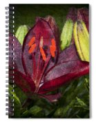 Red Lily 5 Spiral Notebook