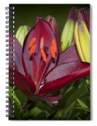Red Lily 6 Spiral Notebook