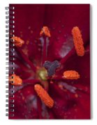 Red Lily Macro Spiral Notebook