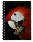 Red Macaw Spiral Notebook