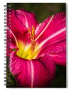 Red Magic Daylily Spiral Notebook