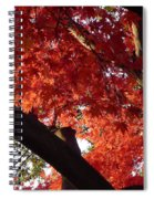 Red Maple 02 Spiral Notebook