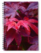 Red Maple After Rain Spiral Notebook